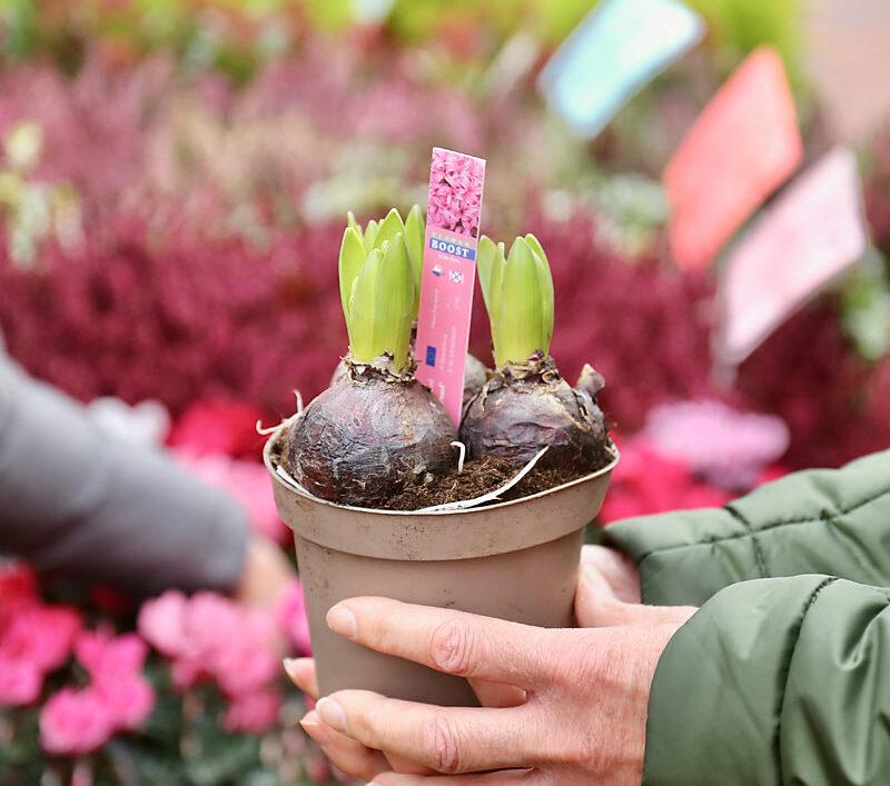 sharmans garden centre ely market